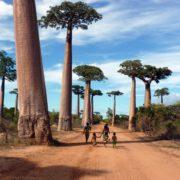 baobab&moringa - Integratore naturale a base di baobab e moringa